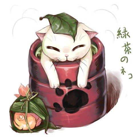 чайные коты, хризантема