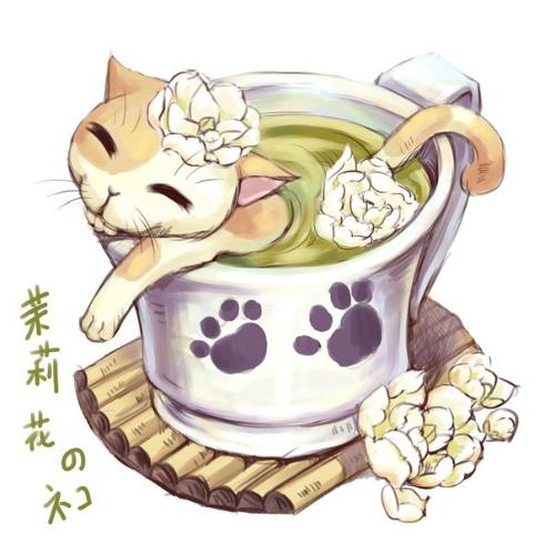 кот, роза