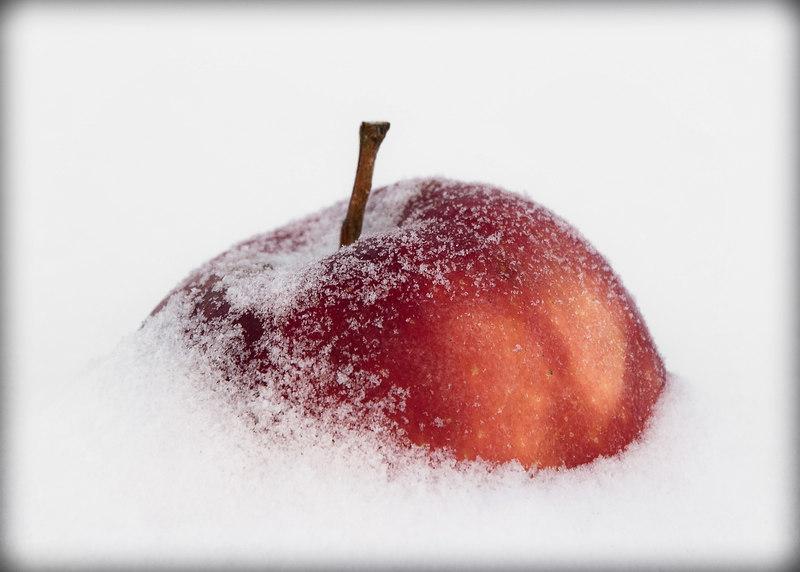 Яблоко в сугробе.