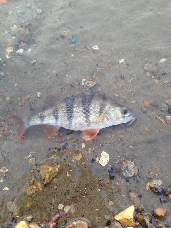 москва рыбалка выходного дня