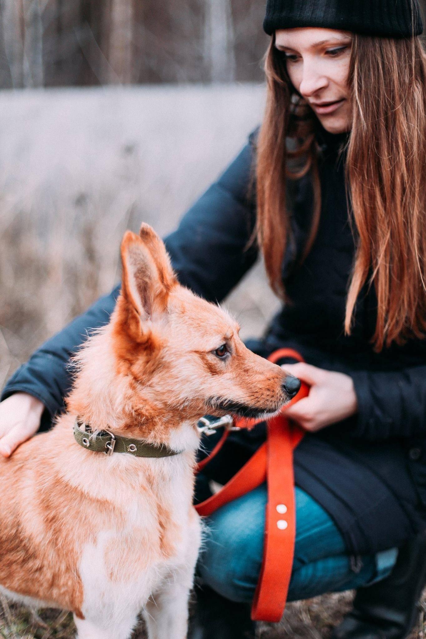 Волонтер і собака