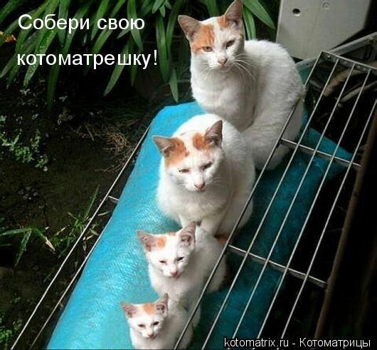 http://s8.hostingkartinok.com/uploads/images/2016/06/41cb7681249b4dde384ad6ecd1852409.jpg