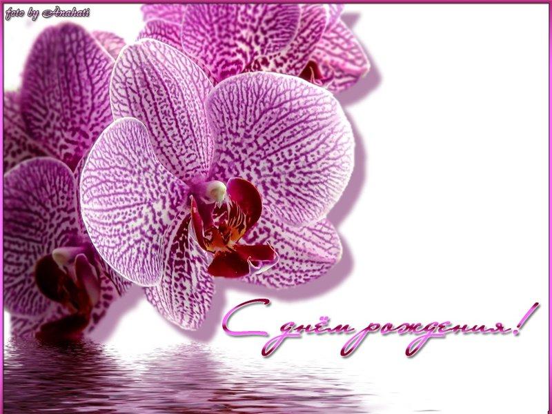 Открытка с днем рождения с орхидеями