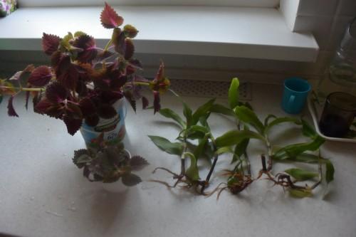 Отдам цветы и отростки 818ff8957422f6008fc1d088792cbb19