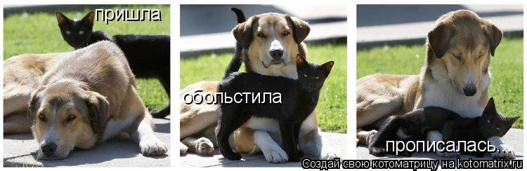 http://s8.hostingkartinok.com/uploads/images/2016/07/b0d9085a35c7c3a60301bf5d9cfa4dc1.jpg