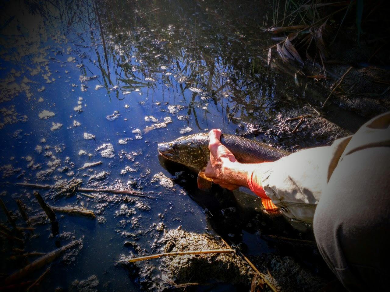 места для рыбалки в ростове и области