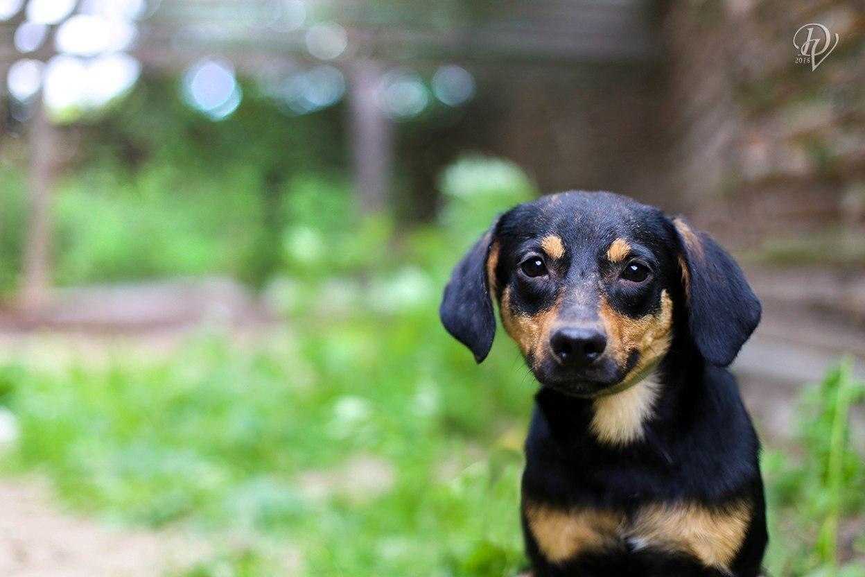 Патрик, г. Киев, скромный, умный, спокойный и уравновешенный пес весом 9 кг. Звонить: 067 656 84 33, 097 562 66 06