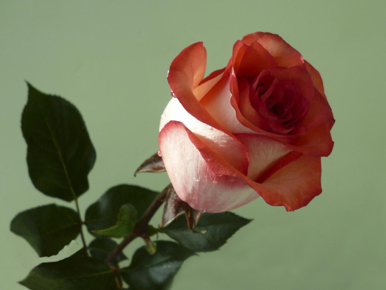 Открытки дню, картинка людмиле цветы