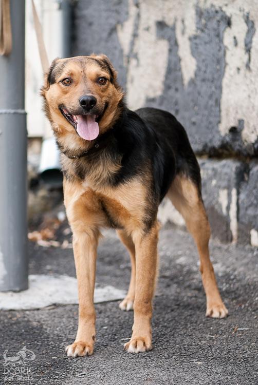 dog14-2_w.jpg