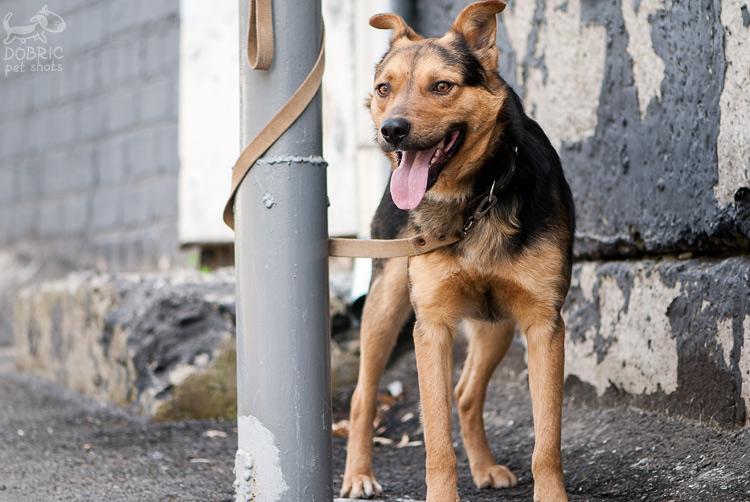 dog14-3_w.jpg