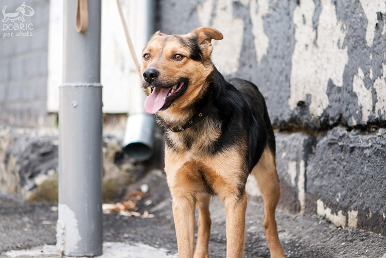 dog14-1_w.jpg