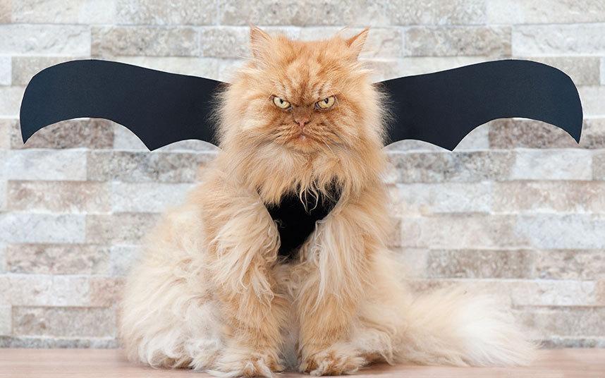 Смешная картинка злой кот, новый год