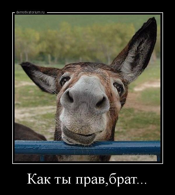 demotivatorium_ru_kak_ti_pravbrat.jpg