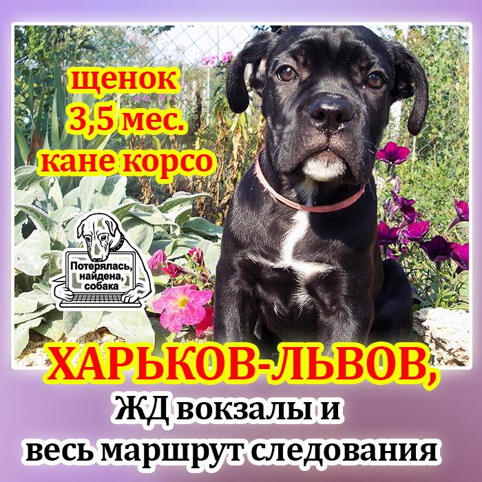 КК щенок, Харьков-Львов.jpg