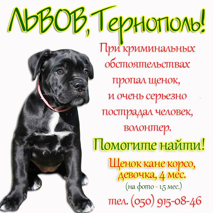 Пропала КК Ардела_Львов, Тернополь.jpg