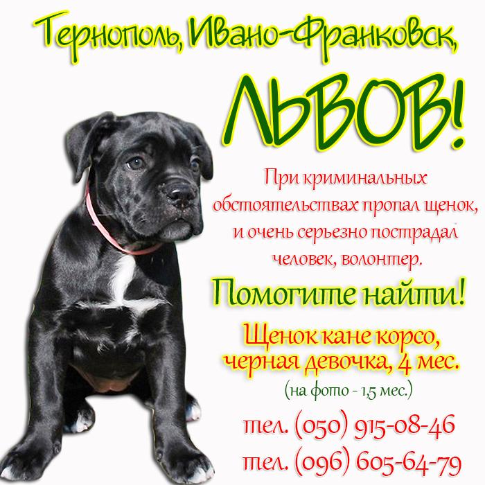 Пропала КК Ардела_Львов, Тернополь_2.jpg
