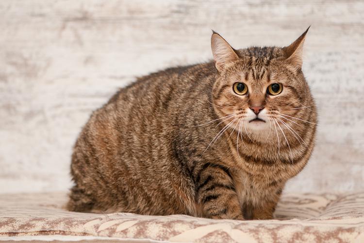 cat-24.jpg