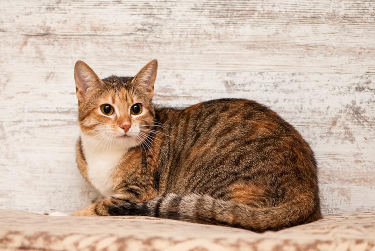 cat-10.jpg