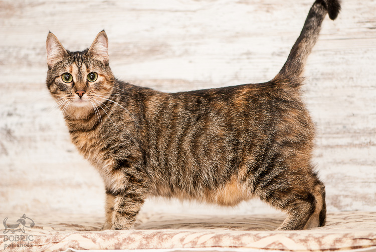 cat6-1.jpg