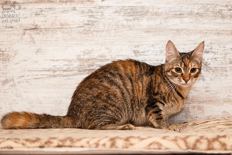 cat7-2.jpg
