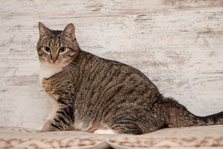 cat-27.jpg