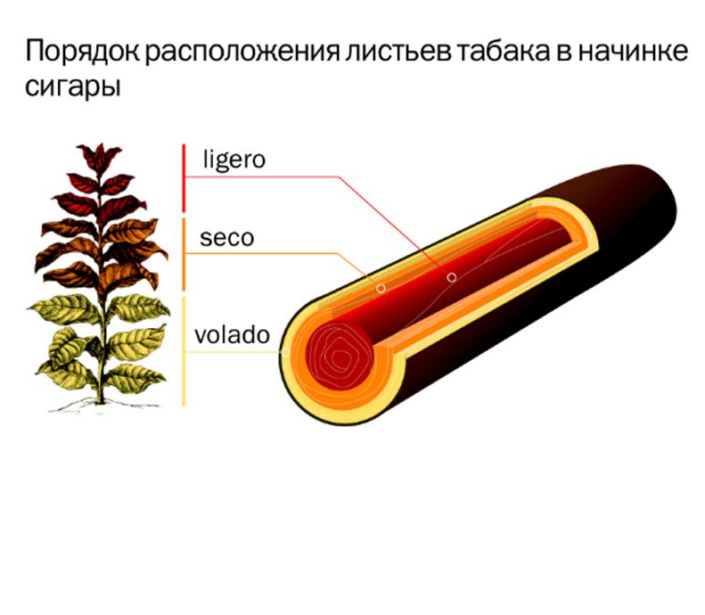 Состав сигары _8528.PNG