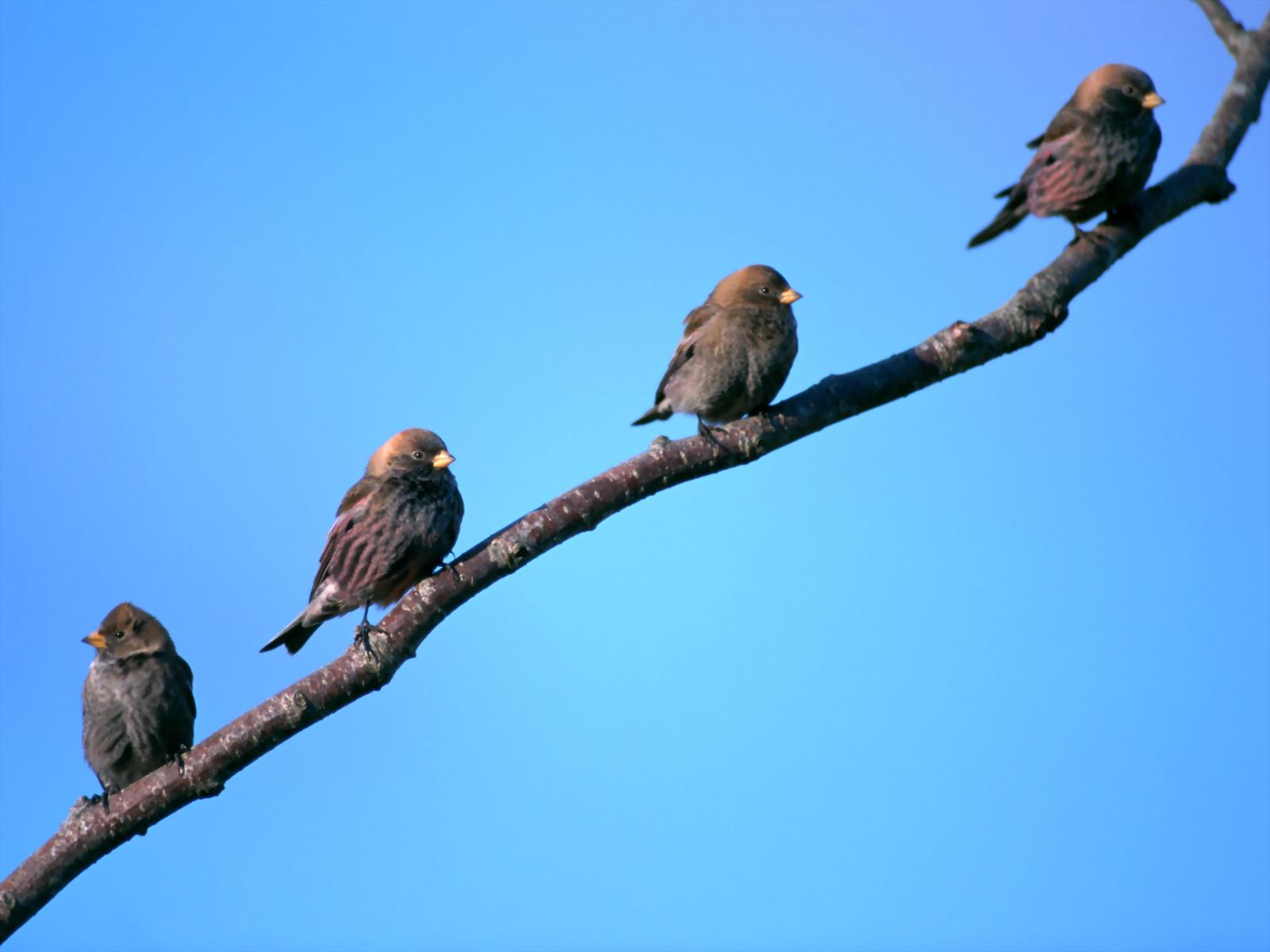 картинки четыре птицы