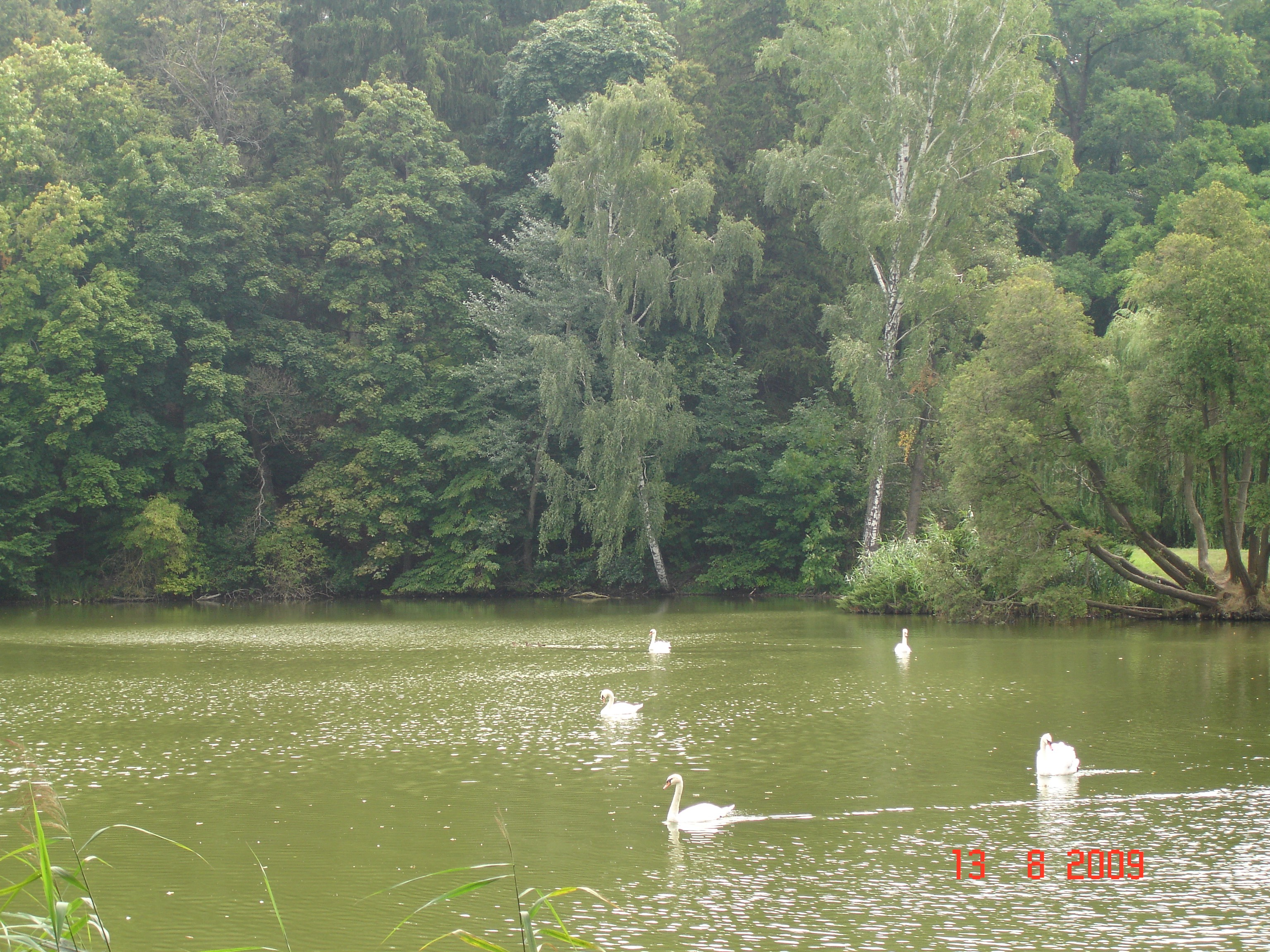 парк «Тростянець», розташованому біля однойменного селища Ічнянського району