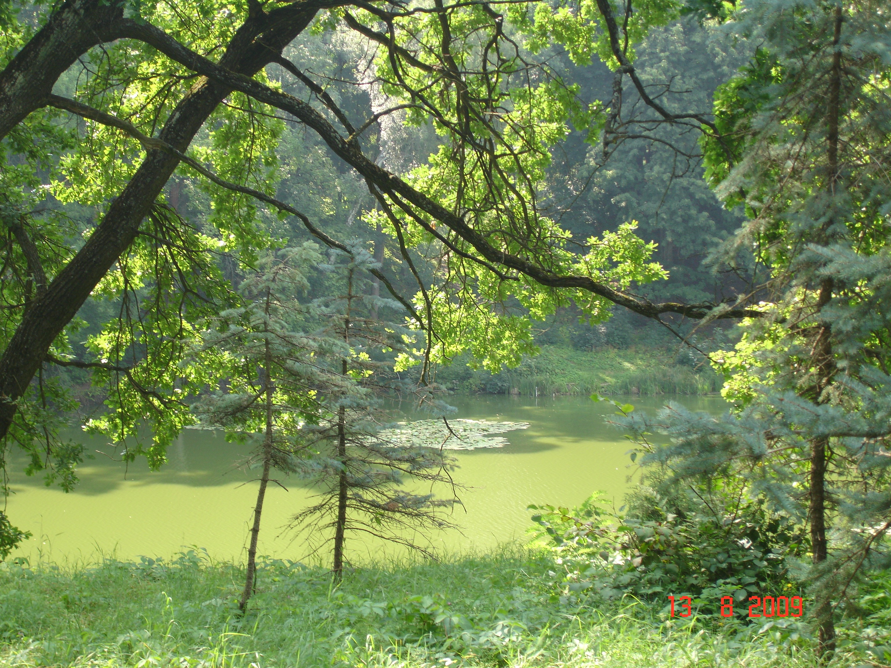 Селище Тростянець. Над одним зі ставів у дендрологічному парку