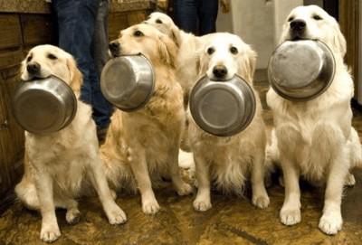 Как научить привередливую собаку кушать