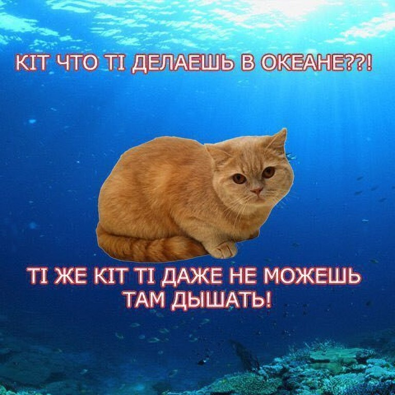 _zRBtKJxt5M.jpg