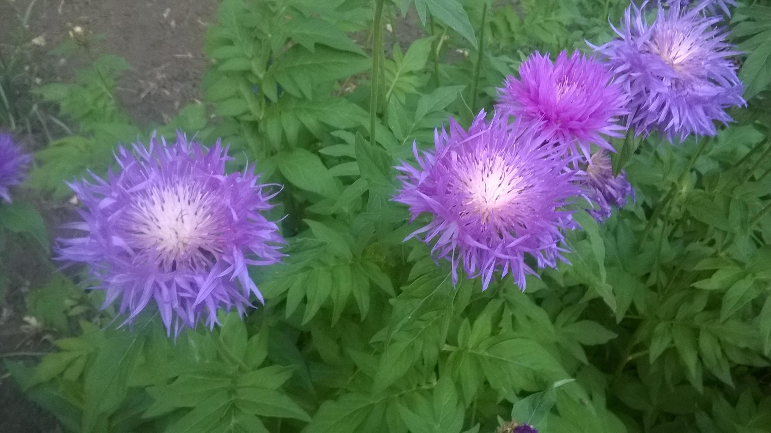 Снова цветы. фотография Донецк