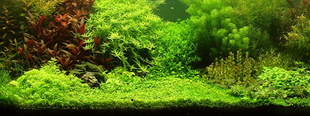 zhyvoj-grunt-aquarium.jpg