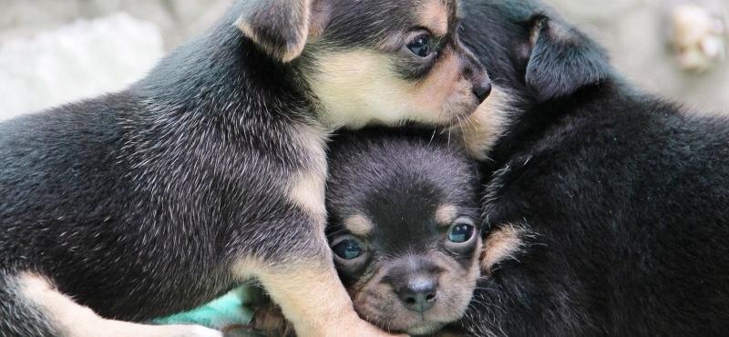 Взять щенка