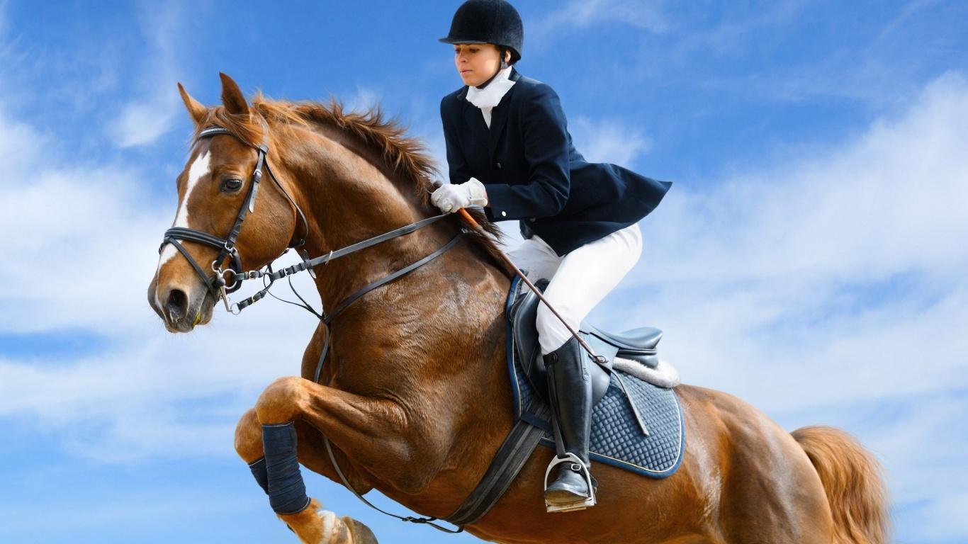 конный спорт.jpg