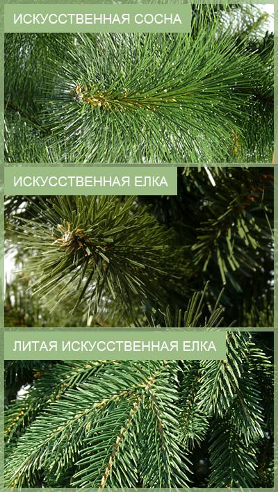 отличия елки от сосны.jpg