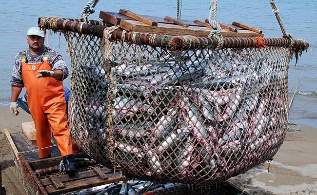 Отечественные рыбопромышленники нуждаются в помощи Владимира Путина