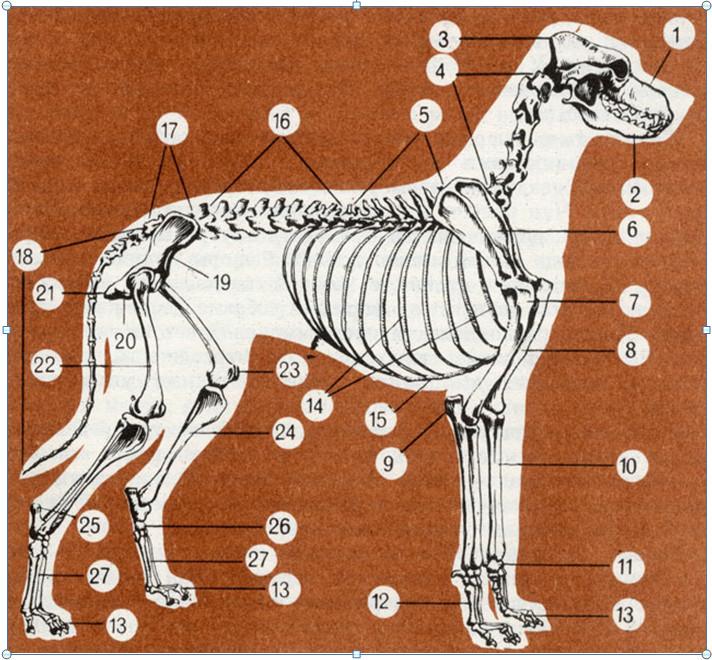 Плечо собаки картинки