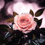 https://s8.hostingkartinok.com/uploads/images/2018/06/beeff010fa0d6a3a290c9742ca1ee41a.jpg
