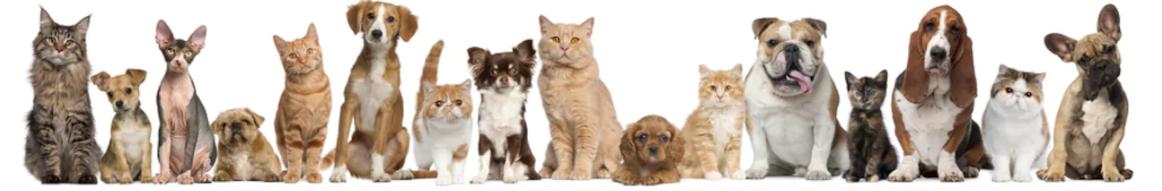 кошки и собаки.png