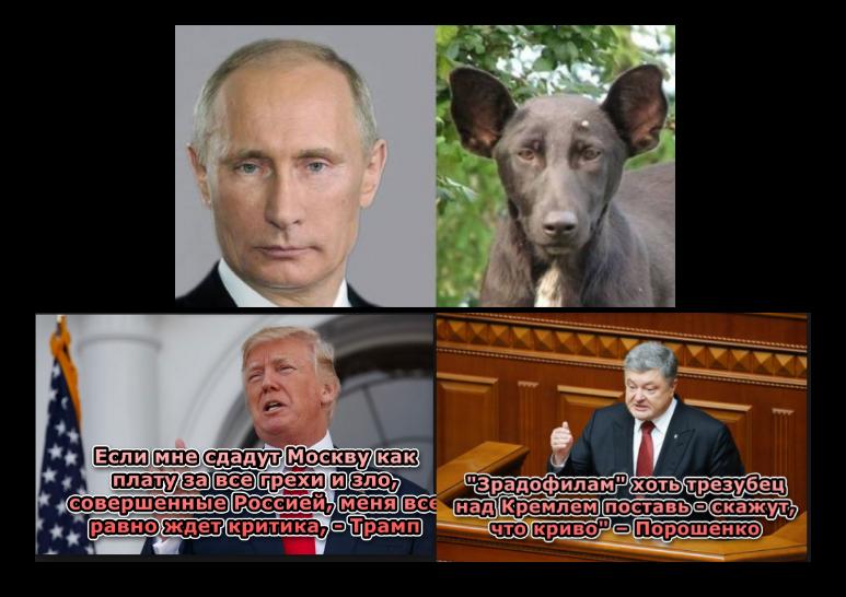 """Сенатори-республіканці розкритикували зустріч Трампа та Путіна і запропонували пошукати """"жучки"""" в подарованому м'ячі - Цензор.НЕТ 6985"""