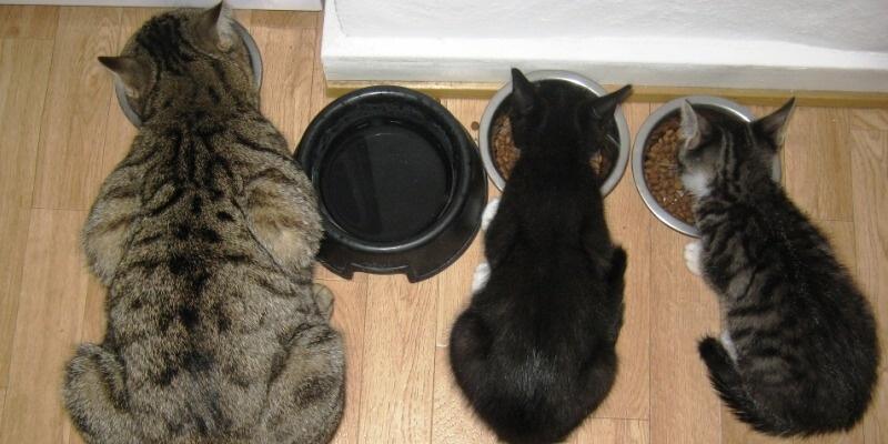 Котёнок домашний