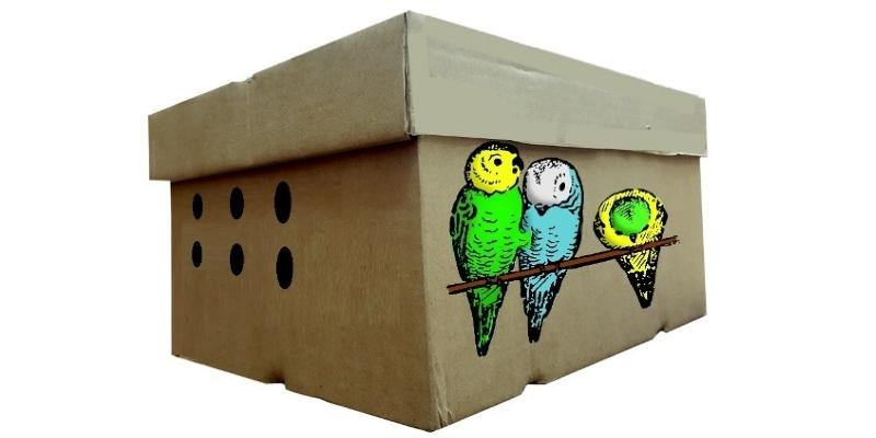 Волнистый попугайчик - 2