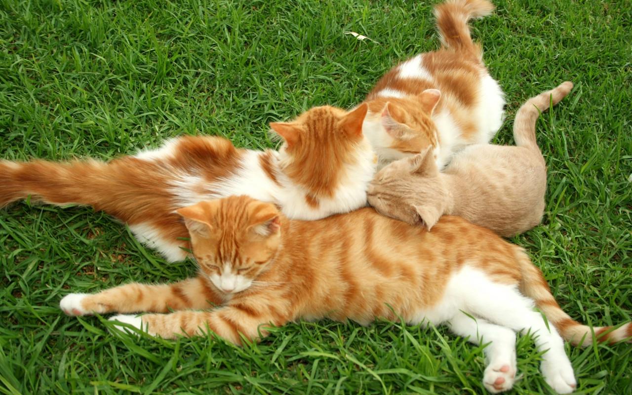 Кошки лекари. 9894dd74add0753e9f36e12fd828ee90