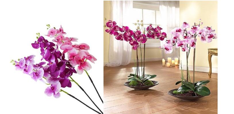 орхидея.png