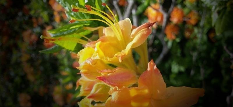Имя и цветок - 1