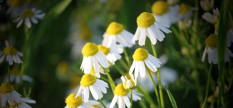 Имя и цветок - 2