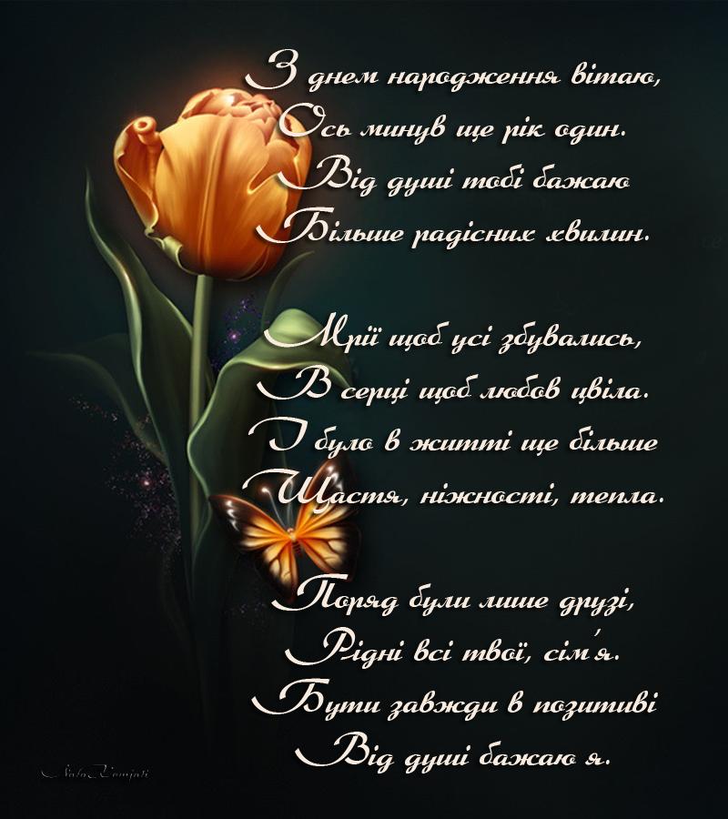 тюльпаны.png