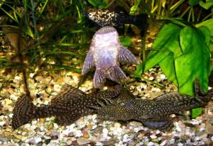 Продам товары для животных и аквариумных рыбок. Обновлено 20.01.2020г. - Страница 14 1aa982d52b23489838d417f4d9cf6004