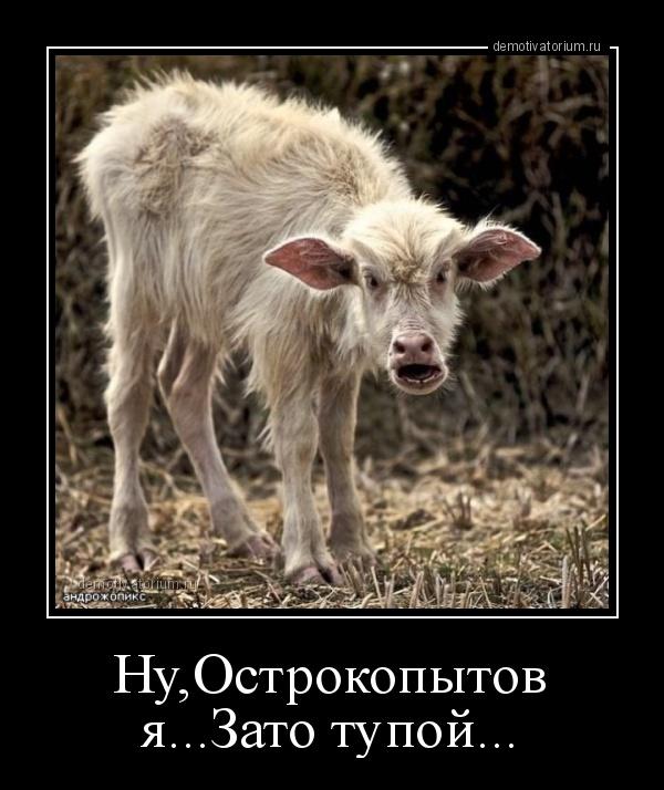 demotivatorium_ru_nuostrokopitov_jazato_tupoj.jpg